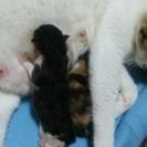 子猫2匹です