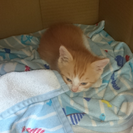 1ヶ月♂子猫
