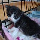 生後20日の5匹の仔猫