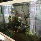 熱帯魚 ミッキープラティ ネオンテトラ グッピー イエロータキシード系