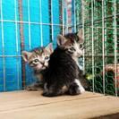 愛媛の方、子猫ちゃんを助けてあげてください。