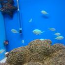 熱帯魚のお店です♪
