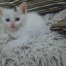 4月17日生まれの子猫♀。