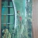 栗林公園◆テレホンカードの画像