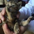 子猫の里親さん募集!!一時停止致します。