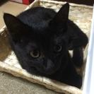 雑種の黒猫 女の子