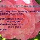 Beauty Aroma Yoga in English(日本語...