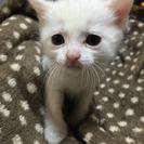 可愛い子猫の里親さん募集