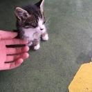 迷い猫 里親になってもらえませんか?