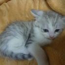 【募集終了】 雄の子猫 1匹の里親募集