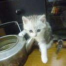 【募集終了】 雄の子猫 1匹の里親募集 - 猫