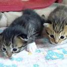 【⭐︎募集⭐︎北海道で子猫の里親さん】