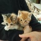 かわいい子猫2匹