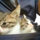 [急募]仔猫の里親募集[4匹引取済]