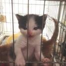 白黒ちゃん 約1.5カ月