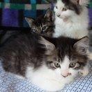 4月14日生まれの子猫5匹です。