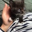 甘えん坊の子猫を貰って下さい!