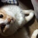 もうじき1歳になる猫。