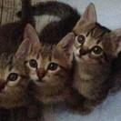 急募!子猫を可愛がって頂ける方を探しております