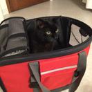 ペット用 バッグ 差し上げます。