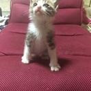 生死を彷徨い生き延びた奇跡の生後4週くらいの子猫
