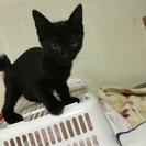 黒い子猫ちゃん