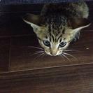 室外機の下で鳴いてたちっちゃなキジ猫さん