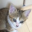 [再投稿]2ヶ月の子猫