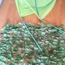 フェイクグリーンカーテン&イケアの葉っぱインテリア セットで! 1...