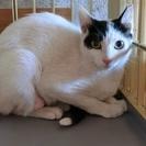 生後10か月齢 黒白美猫