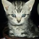 生後1ヶ月の猫です。可愛がって下さる方探しています。2