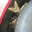 (T_T)★行方不明★捨て猫がバスの車体に乗って連れて行かれまし...