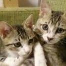 人馴れした可愛い子猫兄弟
