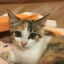 かれんちゃん  とっても美猫です!