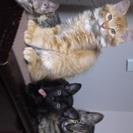 [募集終了します]子猫2匹お譲りします。[ありがとうございました]