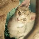 好奇心旺盛な子猫クロシマちゃん