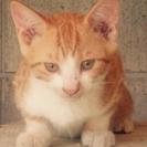 食いしん坊な子猫⭐️チャーちゃん