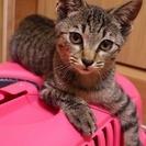 3ヶ月くらいの子猫です