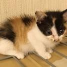 キキちゃん  1ヶ月くらいの女の子
