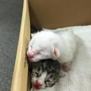 生後1週間程の子猫の画像