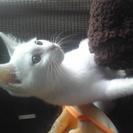白猫 3か月