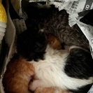 子猫が4匹産まれました⭐️