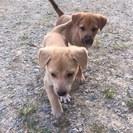 まだ生後1月くらいの元気な子犬たちです!