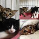 生後6週♂子猫