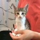生後2ヶ月半くらいの子猫です☆(新しい子を載せています)