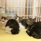 子猫二か月半2兄妹