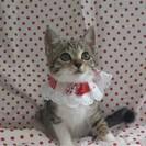 瞳クリクリ可愛いすぎる子猫☆尻尾も長い超美人さん