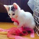 2ヶ月の子猫ちゃんです。
