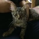 5ヶ月のメスの猫です。