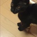 人懐こい黒猫ちゃん